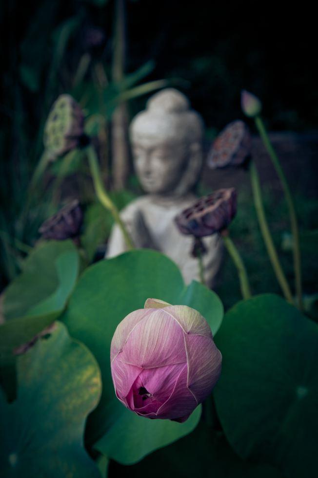 Buddah uncropped